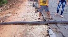 Le serpent qu'ils trouvent au milieu de la route est immense