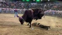 Projeté dans les airs par un taureau, il retombe inconscient dans l'arène !