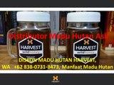 DISKON MADU HUTAN HARVEST, WA   +62 838-0731-8473, Manfaat Madu Hutan