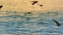 Birds Hunt Mayflies for Their Chicks