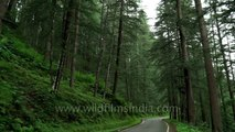 Lohaghat forest in Kumaon mountains - rife with bird call and green with monsoon profusion