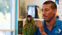 Wie ein Papagei das Leben dieser Omi veränderte