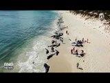 145 Pilot Whales Die in Mass Stranding on Australian Beach