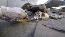 Des squelettes intactes découverts à Pompéi