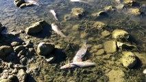Haut-Doubs : la rivière Doubs continue de baisser et les poissons agonisent ou sont déjà morts