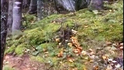 Cette vidéo étonnante de la Terre qui...