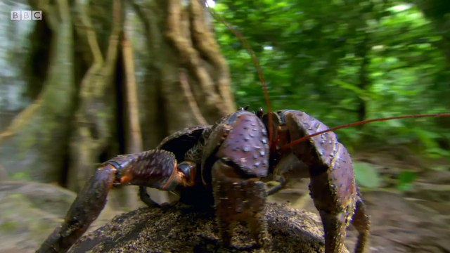 BBC Natural World 2018 Natures Biggest Beasts   AAC  part 2/2