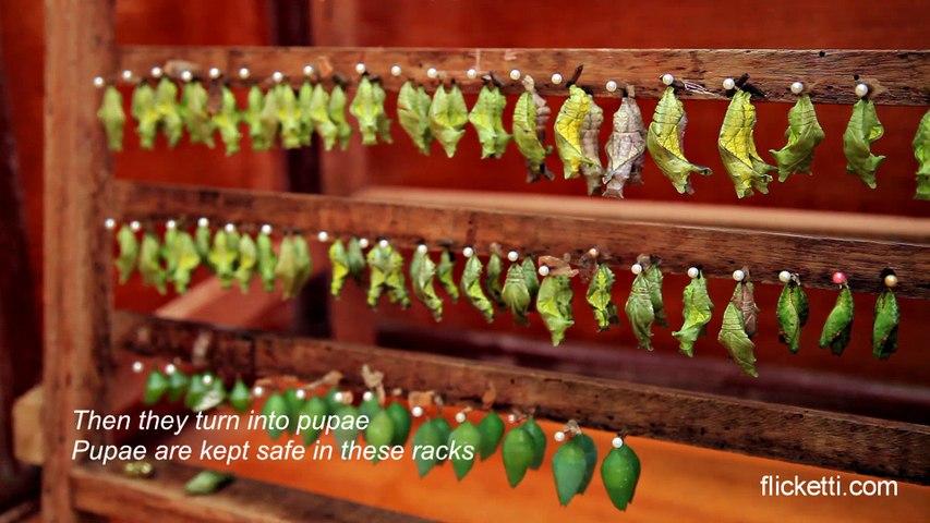 Butterfly farm in Amazon rainforest
