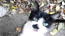 Cat black and white meows and purrs. Eats smacking. In general, Cat-Kazka [Cat life on the street]