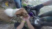 FINAL FELIZ! Agentes de la Guardia Civil rescatan a un perro atrapado en una cueva en Almería