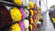 Toussaint: l'impressionnate devanture de chrysanthèmes chez Fleur et Fruits à Tournai