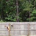 Catapulte à écureuil... Pas très sympa mais tellement drôle