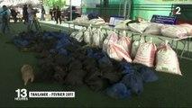 Indonésie : la difficile lutte pour la protection des pangolins