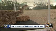 Rattlesnake Solutions offering free snake removal on Halloween