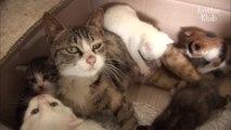 Une chatte allaite des chiots... Adorable