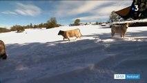 Neige : les éleveurs encore une fois face aux aléas de la météo