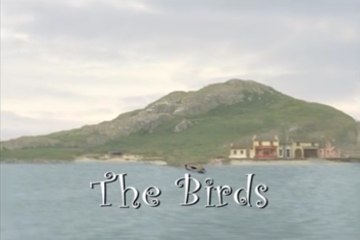 The Island of Inis Cool - #16. The Birds