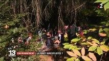 Environnement : les forêts surexploitées ?