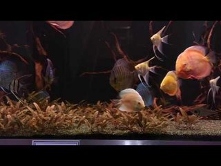 QSS Aquarium & Koi PFK Shoptour