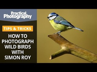 How to photograph wild birds with Simon Roy