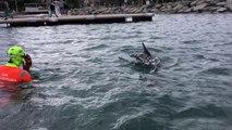 Ce grand dauphin est la nouvelle coqueluche du port de Cavalaire
