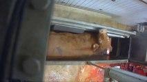 Accusé de maltraitance animale, un abattoir fermé en France