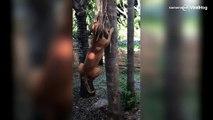 Hond bijt zich vast in palmblad
