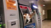 ATM'ye çıkan sevimli kedi ilgi odağı oldu