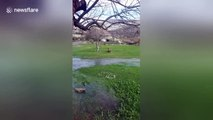 Tree turns into spring, spurting water after heavy rain