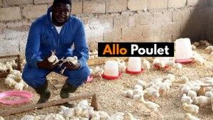 Cameroon: Allô Poulet