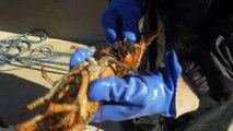 Wild Wild East Series 1 09 of 13 Crustaceans