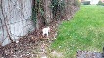 Jack Russel Terrier Fun !