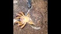 Une araignée sortie de nulle part pour dévorer sa proie... Terrifiant