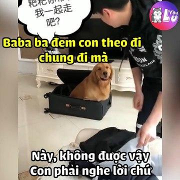 Chú chó dọn đồ đi chơi với chủ
