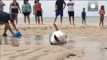 Ce requin s'est échoué sur la plage et des touristes viennent l'aider à regagner la mer