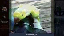 5. Cute pet - Vẹt vui vẻ - tập 1 chim cũng thông minh lắm cơ