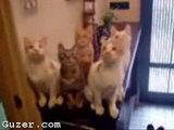 ANIMAUX / HUMOUR - CHATS - Cats watch tennis