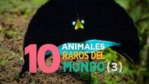 10 Animales raros del mundo | Fascinantes y curiosos 3