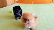 Cutest Puppies - Cute animals #1