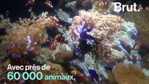 Dans les coulisses du plus grand aquarium d'Europe où on alerte sur l'impact de l'homme sur la vie sous-marine