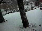 Mon chat joue dans la neige