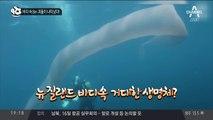 바다 속 8m 괴물이 나타났다!