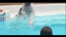 Puppy Sees Kids Splashing In The Water. What He Does Next You've Got To See This!