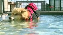 Köpekler için fizik tedavi merkezi ve terapi havuzu Mersin'de uygulamaya başladı