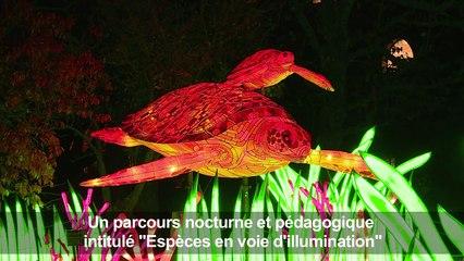 Video Des Animaux Lanternes Geants Au Jardin Des Plantes A Paris
