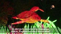 Des animaux lanternes géants au Jardin des plantes à Paris
