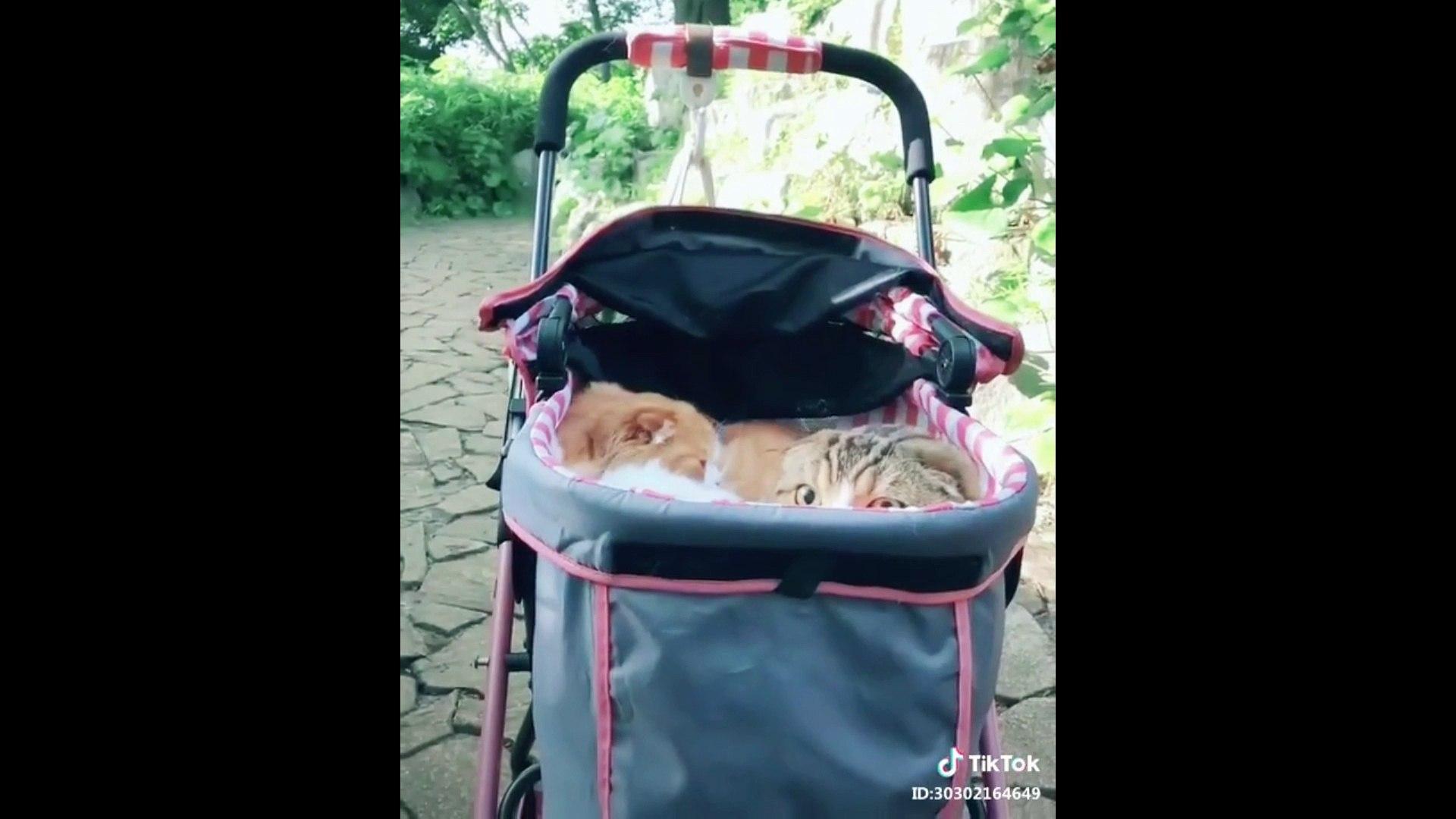 Cute Pet Kucing Lucu Menggemaskan Kucing Video Dailymotion