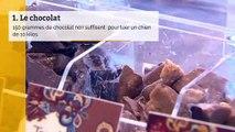 6 aliments qu'il ne faut surtout pas donner à manger à votre chien ou votre chat