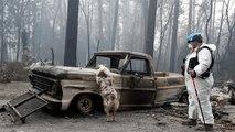 Incendie en Californie : 600 personnes toujours portées disparues