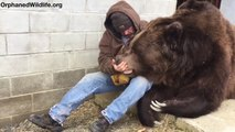 Une belle histoire d'amour entre un grizzly et son dresseur